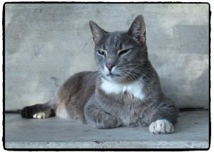 cat-1065334_1920