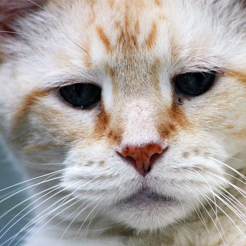 03_Blog_cat-1233034_1920 500x500
