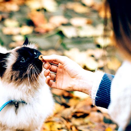cat_handfed 500x500
