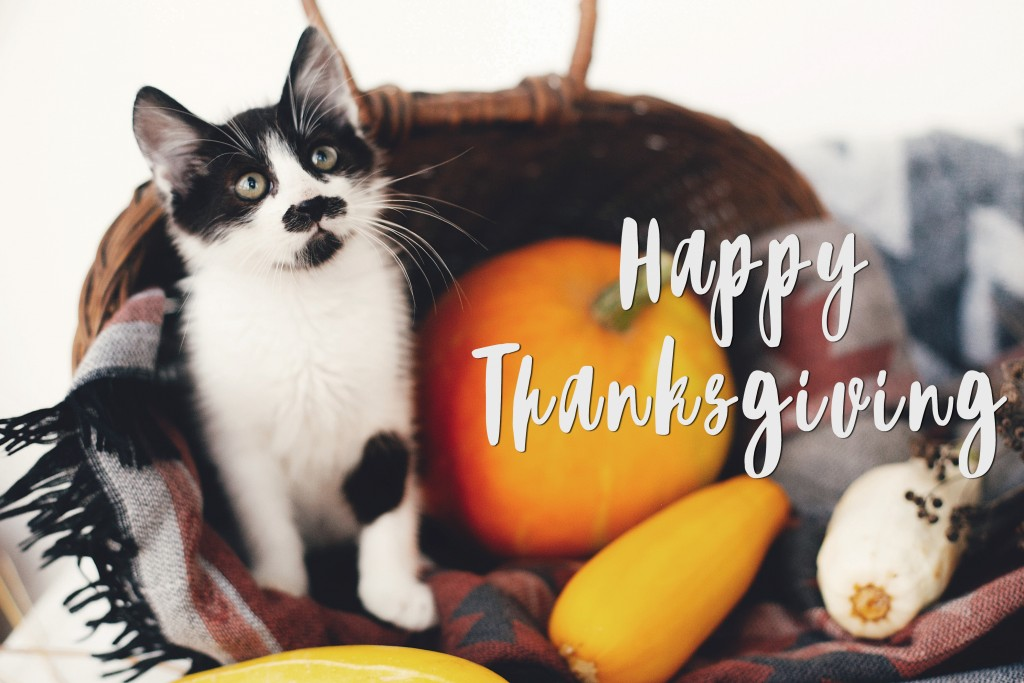 Thanks_Cat_shutterstock_1163609251