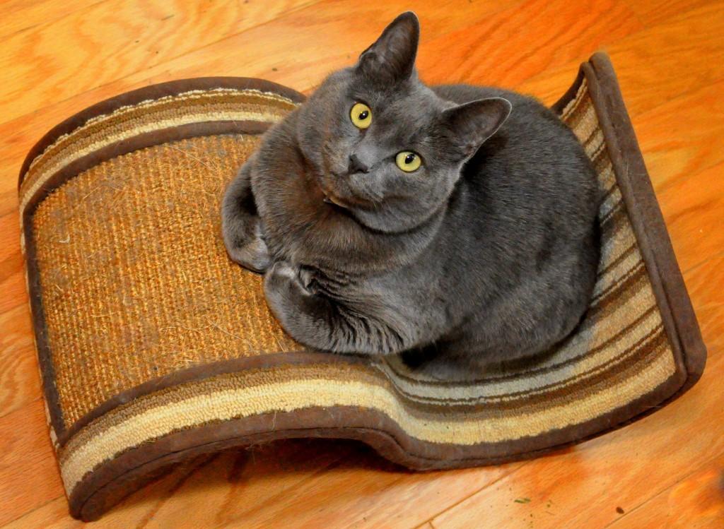 Cat_Scratcher_shutterstock_1017303568