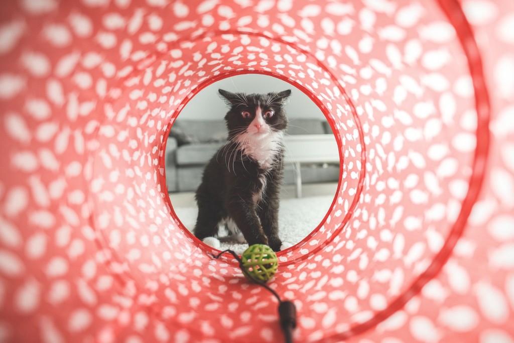 cat-932846_1920