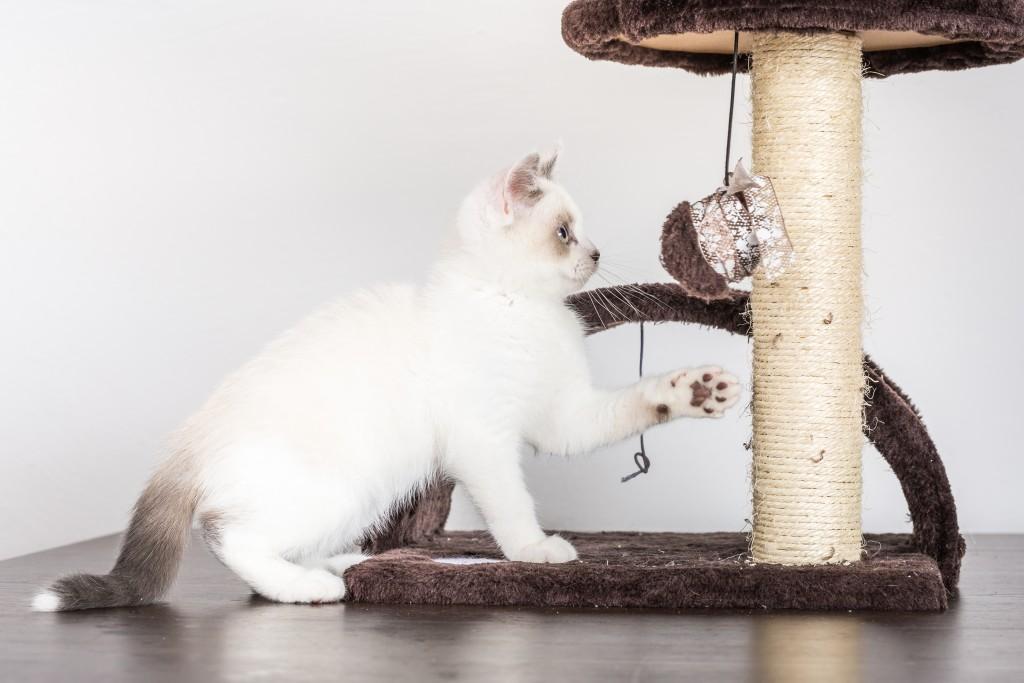 Cat_Condo_shutterstock_449262814