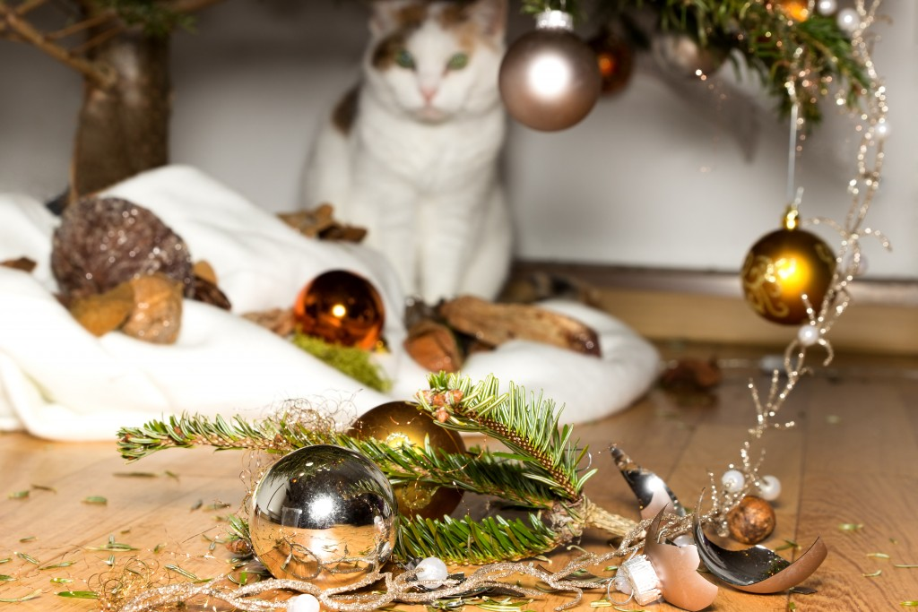 Cat_Broken_Ornament_shutterstock_218036689