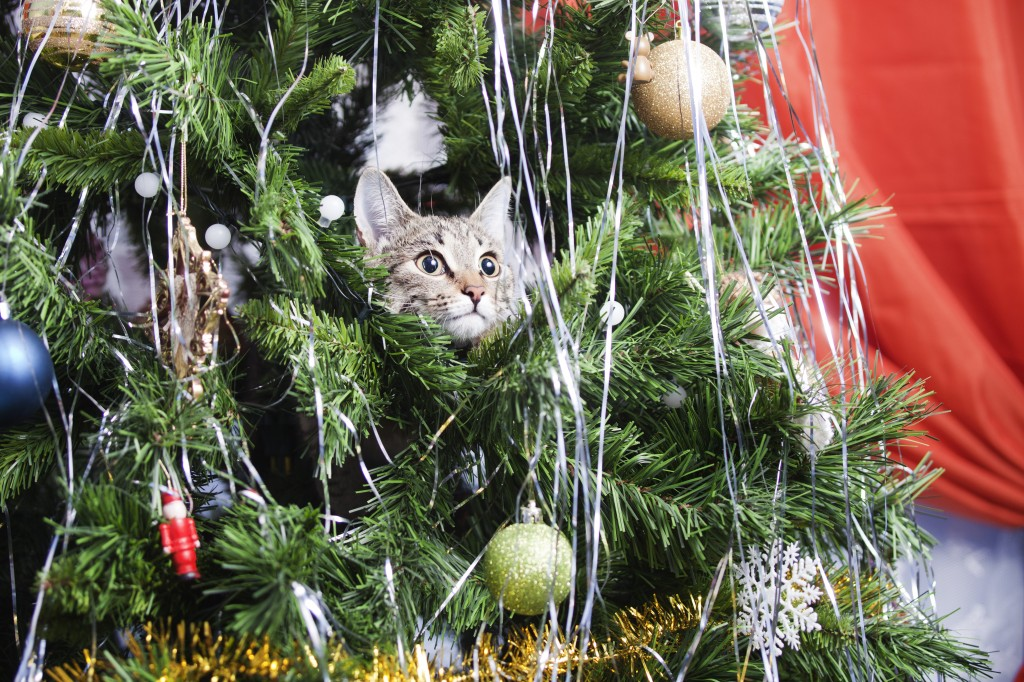 Cat_In_Tree_shutterstock_537641446