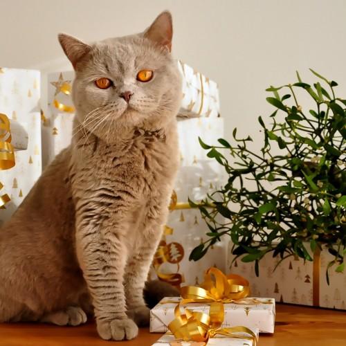 cat-1106804_1920 500x500
