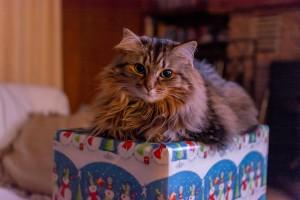 cat-1089144_1920