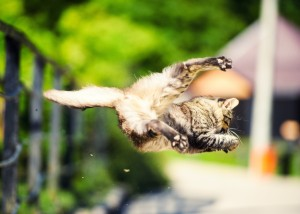 cat_twist_shutterstock_397804642