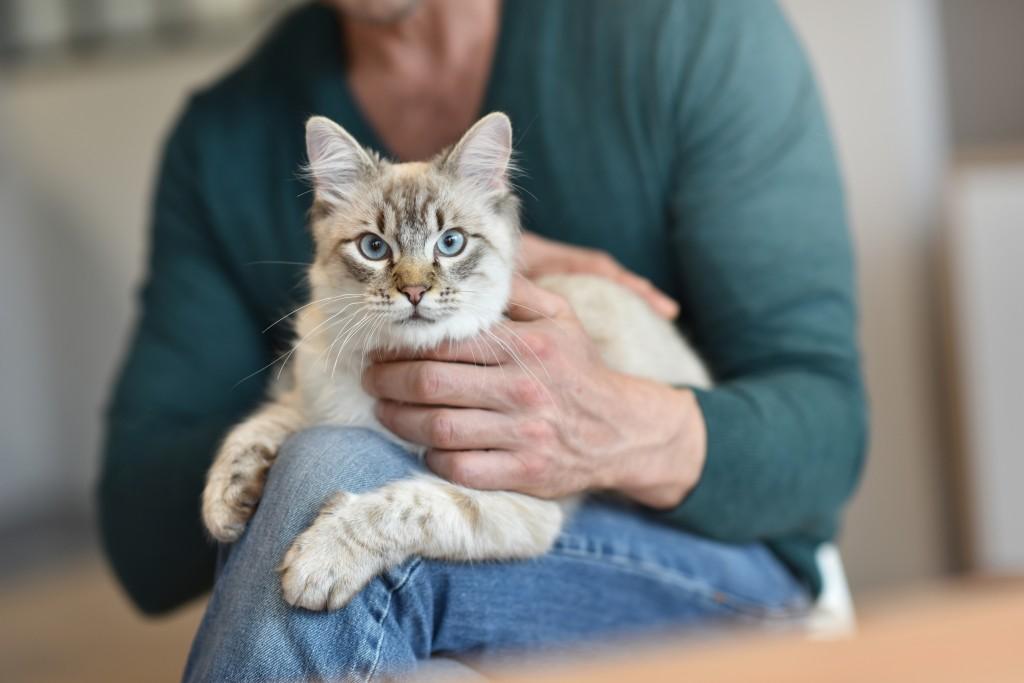 Cat_Cuddles_shutterstock_394589722