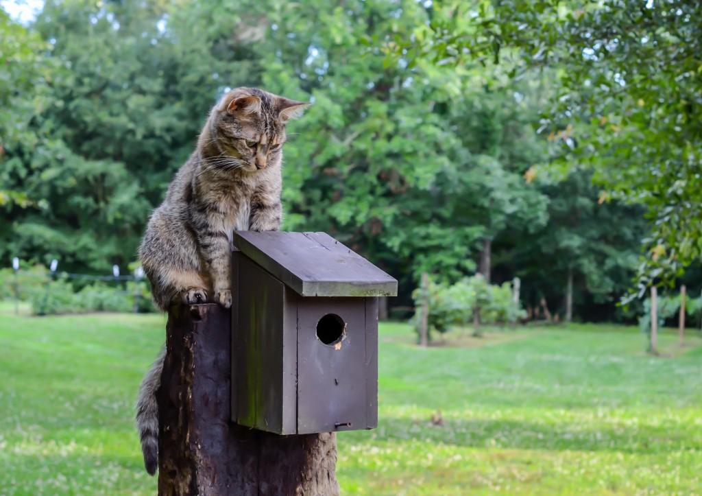 Cat_Birdhouse_shutterstock_776578606