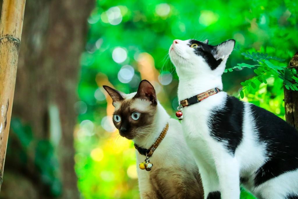 Cat_Hunting_shutterstock_1251747619