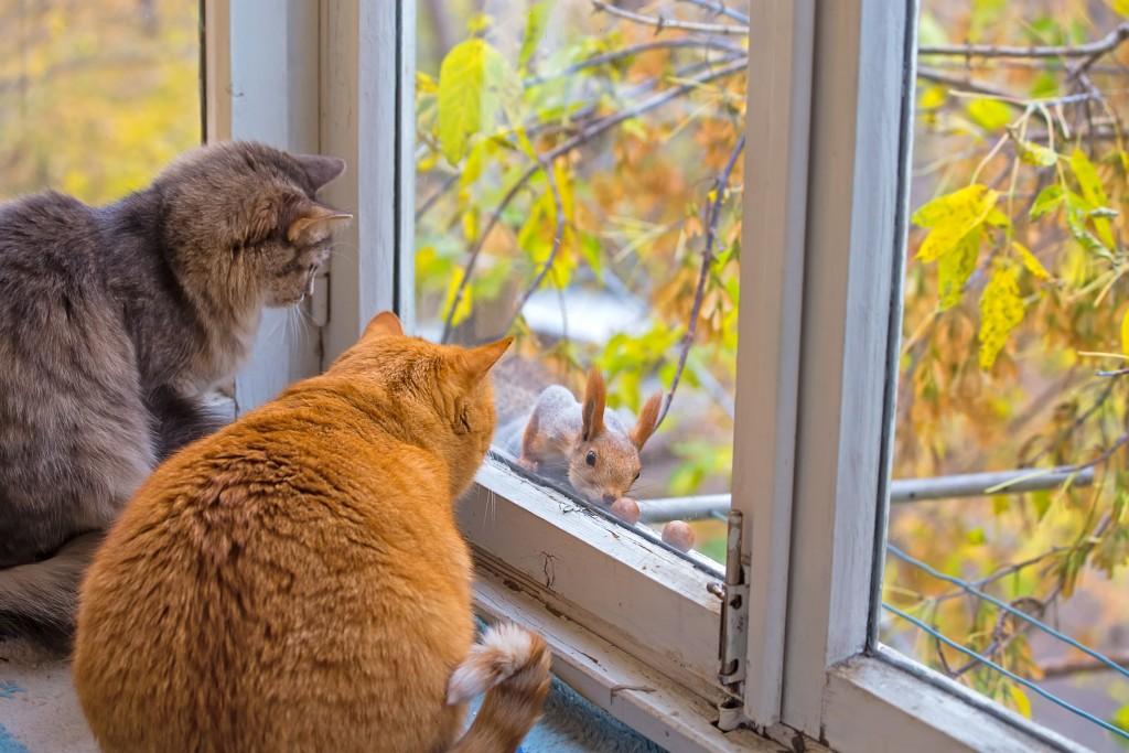 Cat_Squirrel_01_shutterstock_221727409