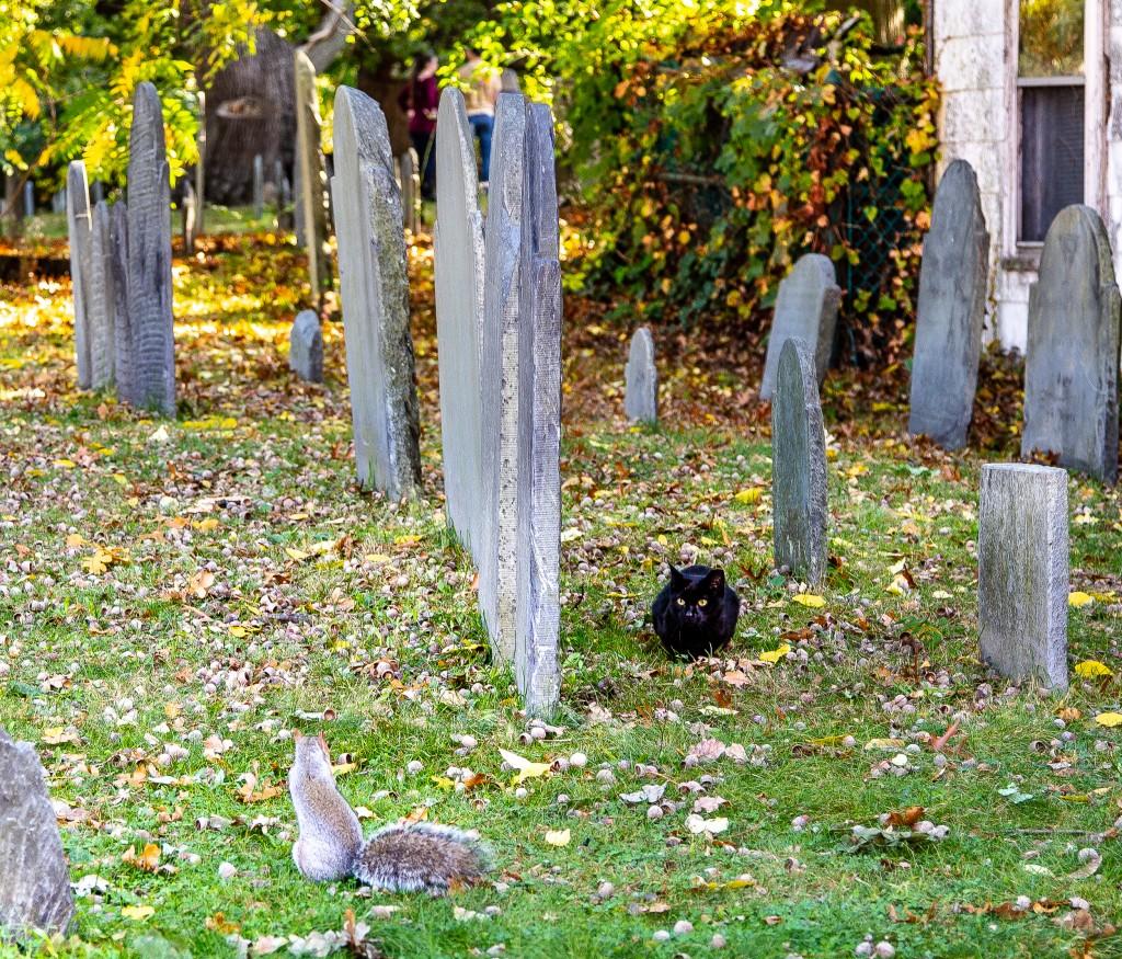 Cat_Squirrel_02_shutterstock_1234425391