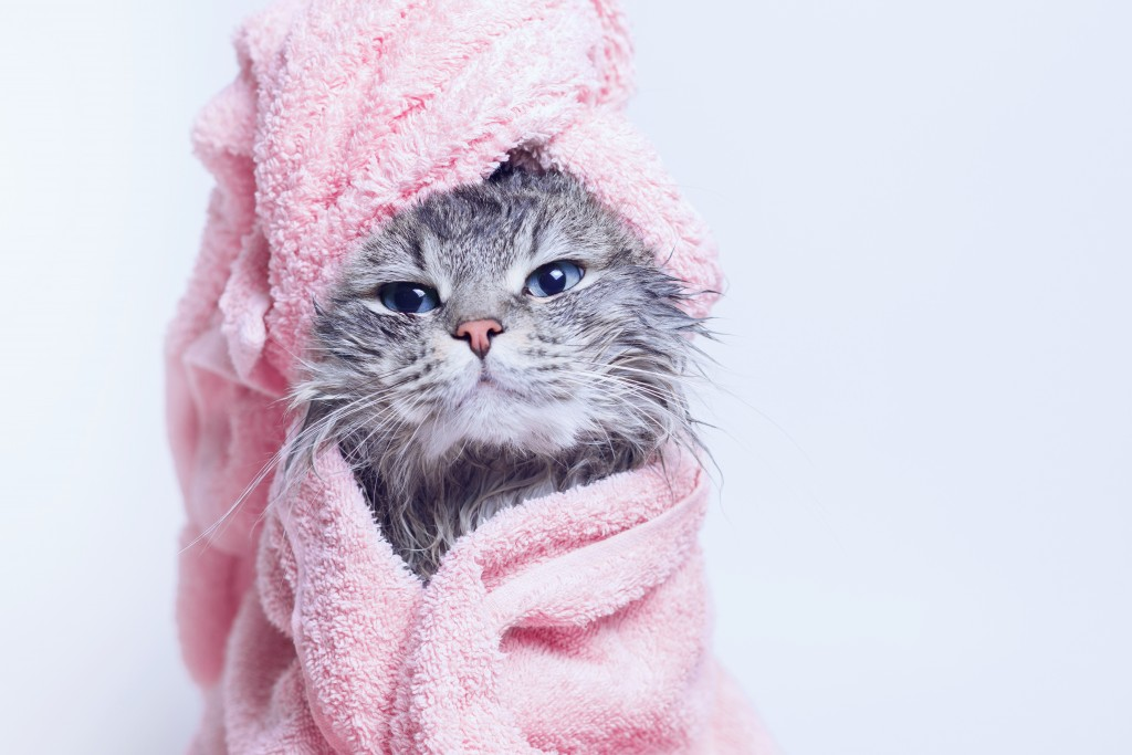 Cat_Spa_shutterstock_1285398925