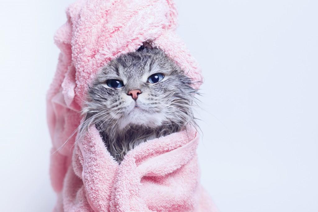 Cat_Spa_shutterstock_1285398925
