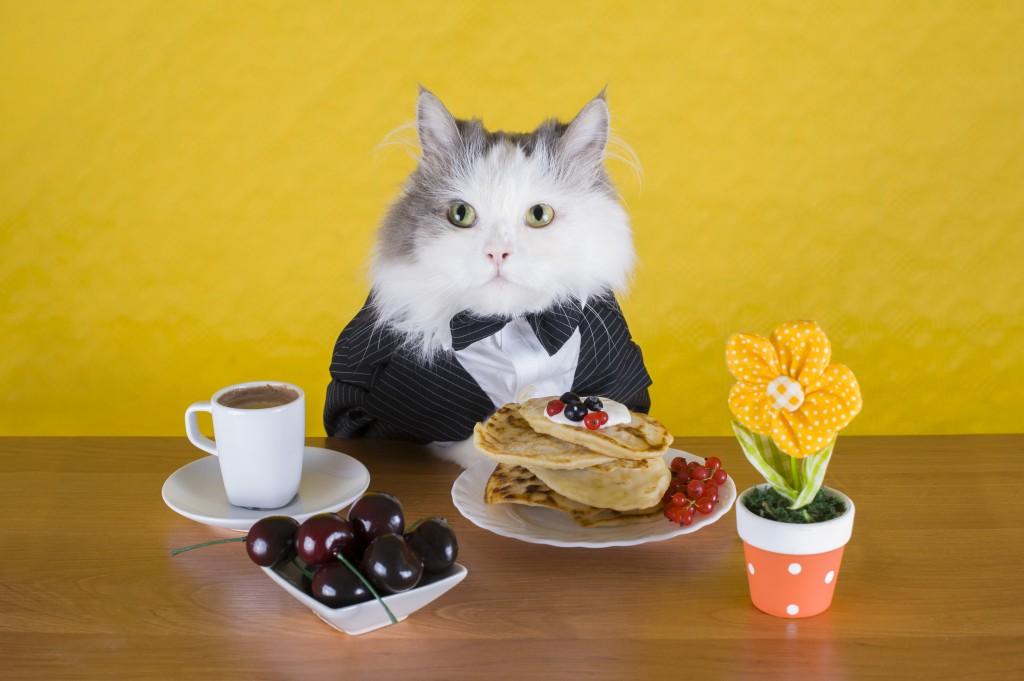Cat_SpecialDinner_shutterstock_210813619