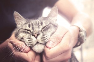 Cat_Happy_shutterstock_520870675