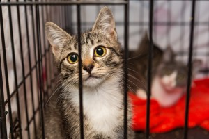 Cat_Shelter_shutterstock_482743528