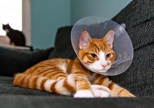 Cat_Cone_shutterstock_231675475