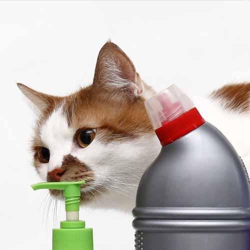 Cat_CleaningProducts_shutterstock_1314365285 500x500