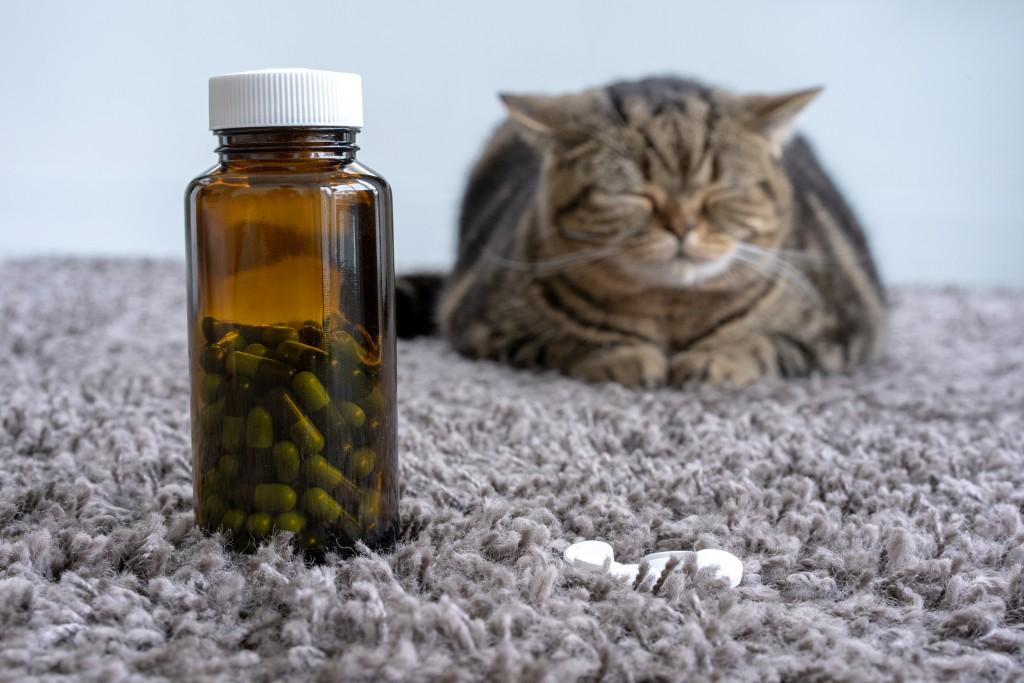 Cat_Medicine_shutterstock_1232094154