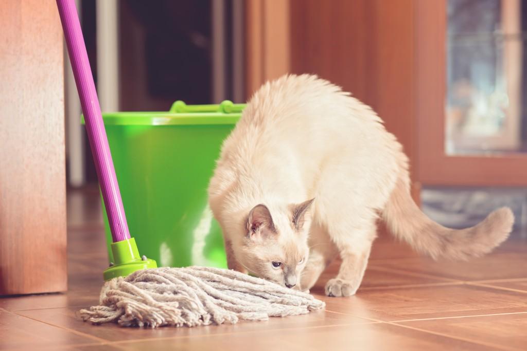 Cat_Mop_shutterstock_1295726893