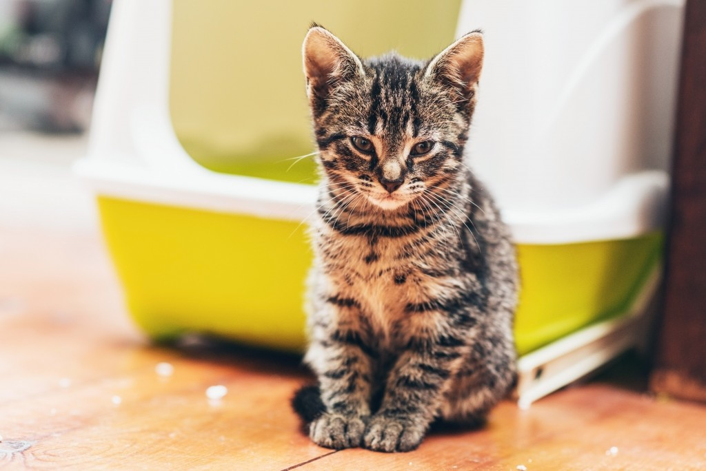 Cat_CoveredLitterBox_shutterstock_277153649